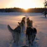 hundsportspann